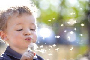 Allergies, pollen - dandelion